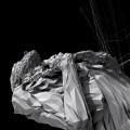 Chrysalide / By Yann Bertrand & Damien Serban / 2005