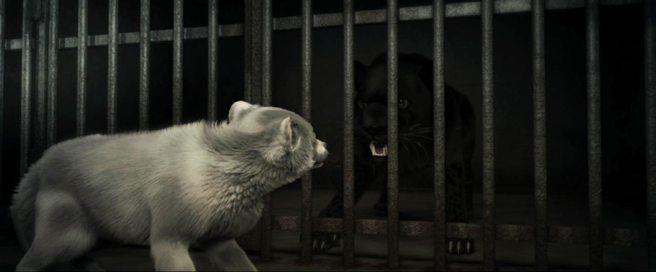 Animal_image4