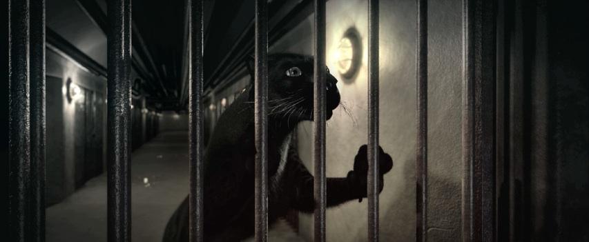Animal_image1
